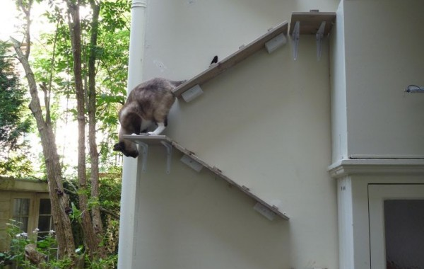 Katten trapje